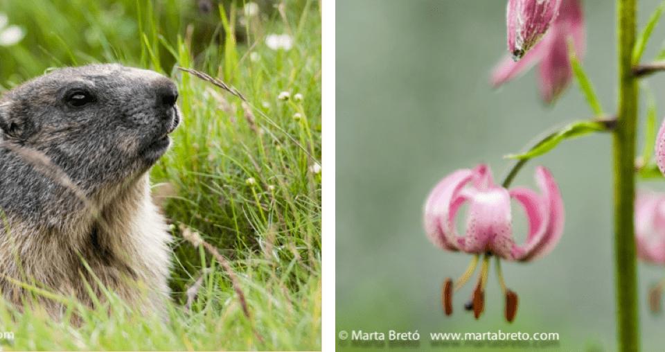 Phototrekking de primavera en el Valle de Núria