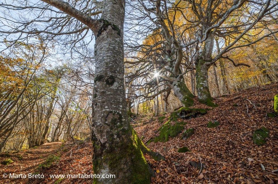 Phototrekking de otoño en el Valle de Aran