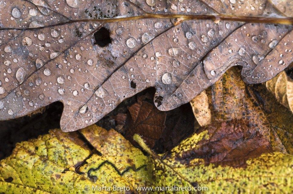 Cronica del Phototrekking de otoño