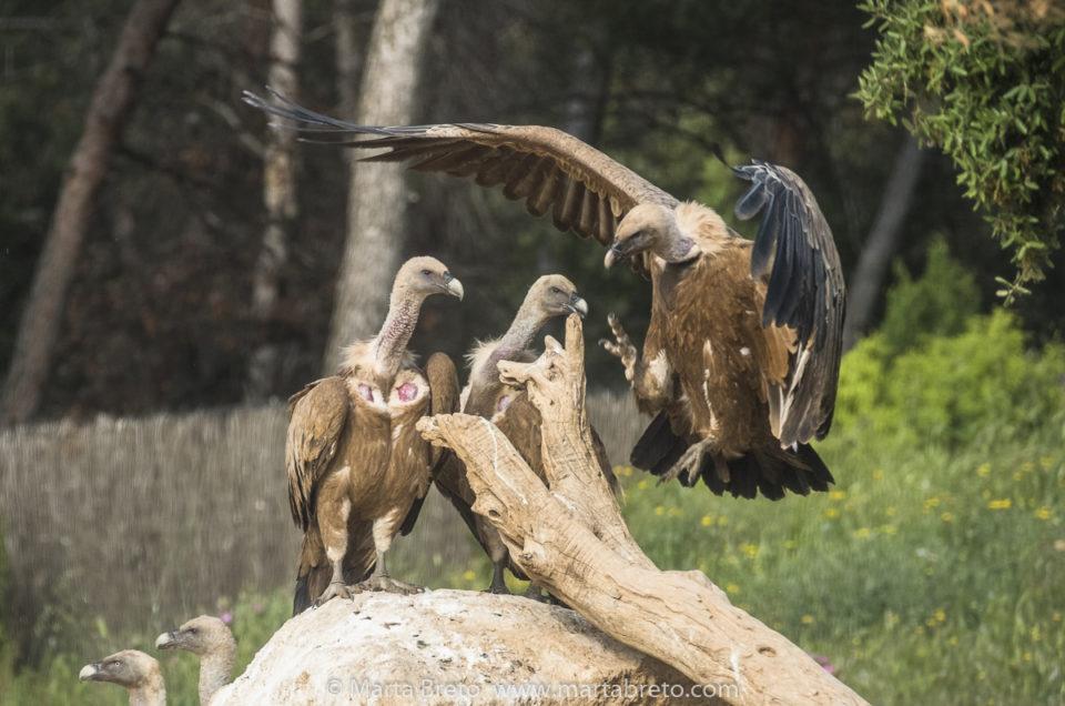 """Phototrekking """"Voltors i estels a Matarranya"""": Crònica i fotos"""